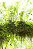 Vegetation Rainforest Royalty Free Stock Image