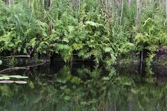Vegetation reflecting on river surface Royalty Free Stock Images