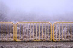 Vegetation rimfrost Fotografering för Bildbyråer