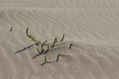 Vegetation and ripples in the sand, on the beach Stock Photo