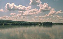 Vegetation at the river Danube. River vegetation in the Danube royalty free stock photo