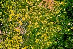 Vegetation at the river Danube. River and swamp vegetation in the Danube Delta stock photos