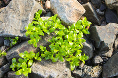 The vegetation on the rocks Stock Photos