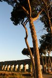 Vegetation in Rome Royalty Free Stock Photography