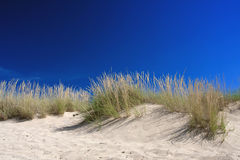 Vegetation, sand and blue sky Royalty Free Stock Photos