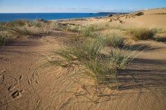 Vegetation in sand dunes on the coast, Sardinia, Italy Royalty Free Stock Photography