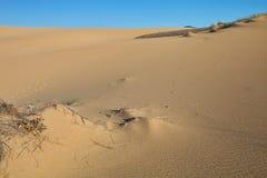 Vegetation in sand dunes on the coast, Sardinia, Italy Stock Images