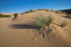 Vegetation in sand dunes on the coast, Sardinia, Italy Stock Photos