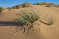 Vegetation in sand dunes on the coast, Sardinia, Italy Stock Photography