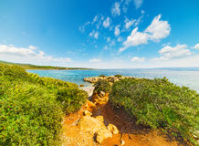 Vegetation by the sea in Alghero Stock Photo