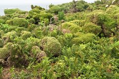 Vegetation at Seven Islands Royalty Free Stock Photography