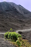 Vegetation on the side of a Volcano Royalty Free Stock Images