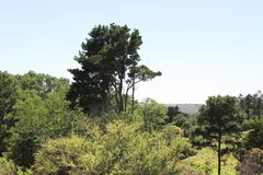 Mountain vegetation royalty free stock photos