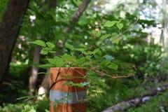 Vegetation som tar över den konstgjorda stolpen royaltyfri fotografi