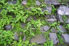 Vegetation on stonewall_02 Stock Image