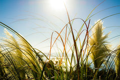 Vegetation in the sun Royalty Free Stock Image