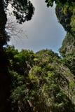 Vegetation surrounding the lagoon. Emerald cave. Koh Mook. Thailand Stock Photo