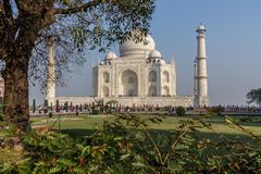Vegetation and Taj Mahal Royalty Free Stock Photo