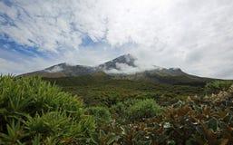 Vegetation and Taranaki Stock Photography