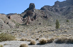 Vegetation in the Teide Royalty Free Stock Photos
