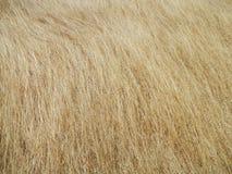 Vegetation texture royalty free stock photos