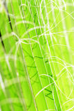 Vegetation textures scene. By highlighting the color and shape Stock Photography