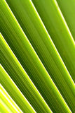 Vegetation textures scene. By highlighting the color and shape Stock Images