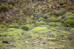Vegetation in Torres del Paine National Park, Magallanes Region, southern Chile. Vegetation along the slope of the Cuernos del Paine in Torres del Paine National Royalty Free Stock Image