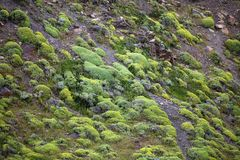 Vegetation in Torres del Paine National Park, Magallanes Region, southern Chile. Vegetation along the slope of the Cuernos del Paine in Torres del Paine National Stock Photography