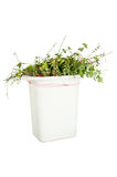 Vegetation in trash can Royalty Free Stock Image