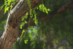 Vegetation, Tree, Branch, Leaf Royalty Free Stock Images