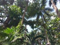 Vegetation, tree, ecosystem, arecales, plant, borassus flabellifer, palm tree. Vegetation is tree, plant and flora. That marvel has ecosystem, borassus stock photos