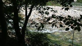 Vegetation, Tree, Nature Reserve, Leaf stock image