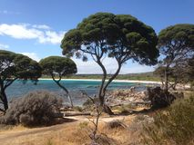 Vegetation, Tree, Nature Reserve, Plant stock image