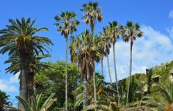 Vegetation, Tree, Palm Tree, Woody Plant stock photography