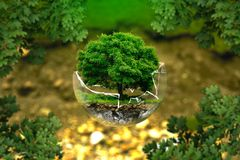 Vegetation, Tree, Plant, Grass royalty free stock photos