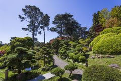 Vegetation and trees in a japanese garden Royalty Free Stock Photo