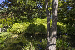 Vegetation and trees in a japanese garden Stock Photography