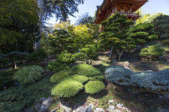Vegetation and trees in a japanese garden Stock Images