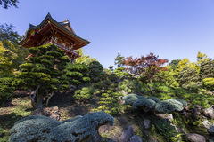 Vegetation and trees in a japanese garden Royalty Free Stock Photography