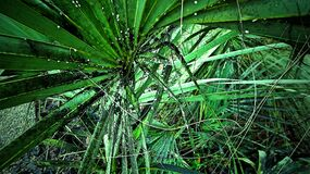 Vegetation in tropical forest stock photo