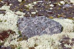 Vegetation of the tundra. The vegetation of the tundra Stock Photo