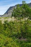The vegetation of the tundra.  Stock Photos