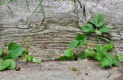Vegetation between two wooden boards Stock Photography