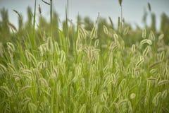 Vegetation und Gewitter Stockbild