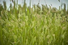 Vegetation und Gewitter Stockbilder