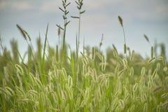 Vegetation und Gewitter Lizenzfreies Stockfoto