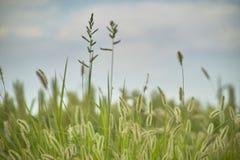 Vegetation und Gewitter Lizenzfreie Stockbilder