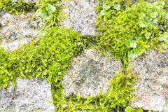 Vegetation unter Steinen Lizenzfreie Stockbilder
