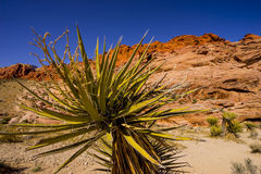Vegetation in the Valley of Fire Stock Photos